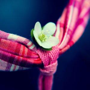 Little Flower IPad 4 Wallpaper Hd