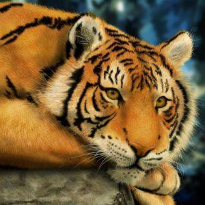 Tiger-iPad-pro-Wallpapers-HD