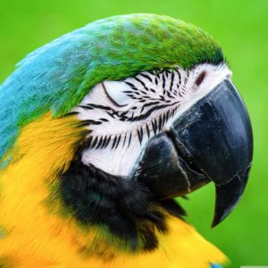 macaw_parrot-ipad-wallpaper