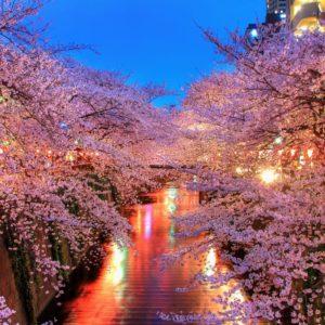 o_hanami_blossom_sakura_japan_ipad-pro
