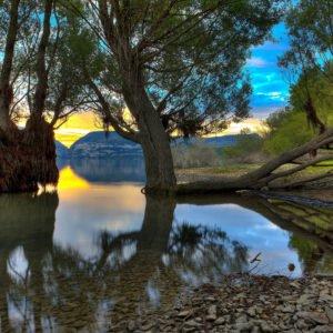 tree-in-lake-4k