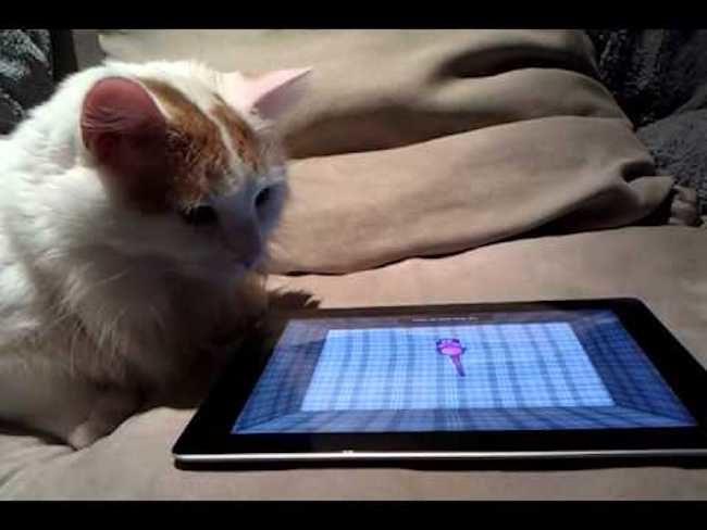 cat-toys-lite